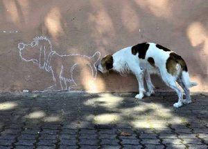 perfectly-timed-photos-36