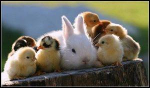 【フィリピン語(タガログ語)の教科書】「生き物・動物」を意味するフレーズ